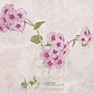 Phlox, Perfume And Lace  by Sandra Foster