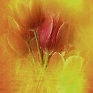 A Whisper Of Tulips by Rene Crystal