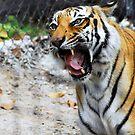 Roaring Tiger by Jason Pepe