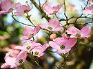 Trees Pink Dogwood Tree Flowers art Baslee Troutman by BasleeArtPrints
