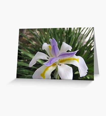Irresistible Iris  Greeting Card
