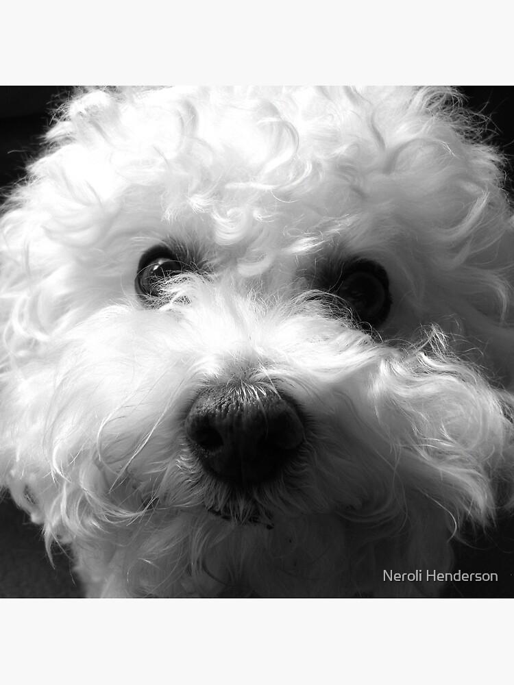 Bichon Frise - Black and White by neroli