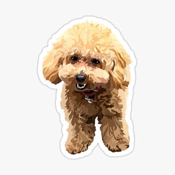 Muffin the toy poodle Sticker