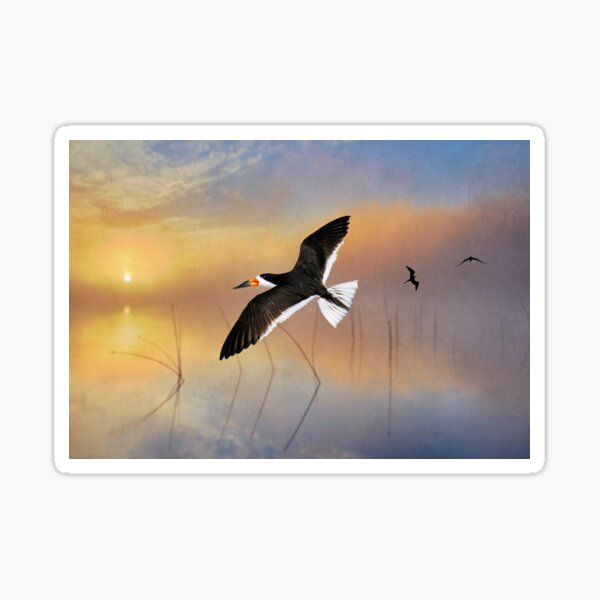 Black Skimmer at Sunset Sticker