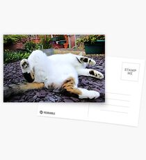 Dignified Postcards