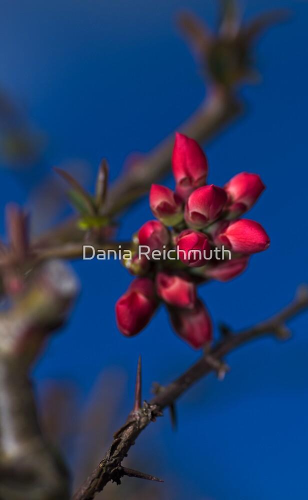 Spring by Dania Reichmuth
