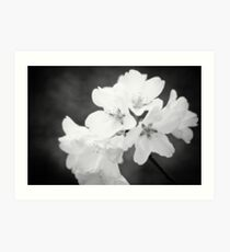 Spring Blossoms in Black and White Art Print