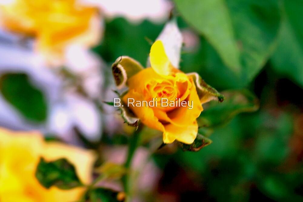 One beauty among many by ♥⊱ B. Randi Bailey