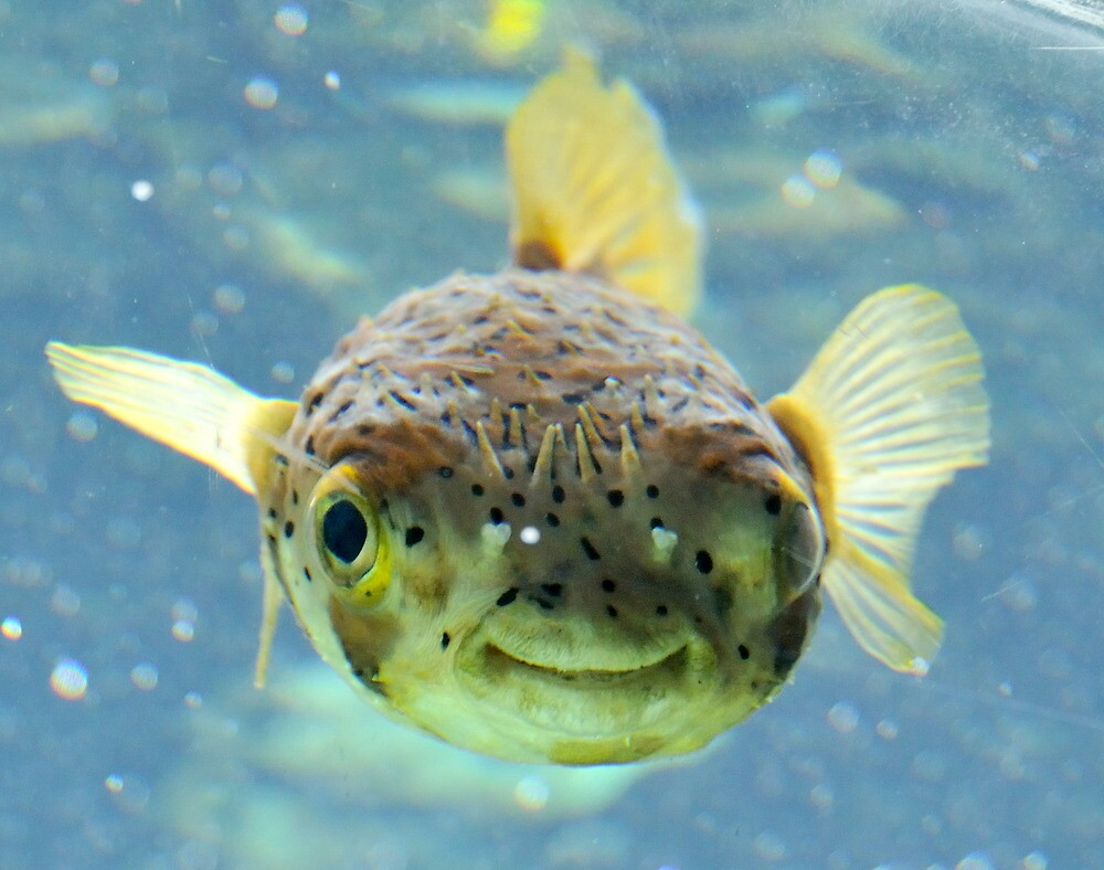 Image gallery smiling fish for Where to fish