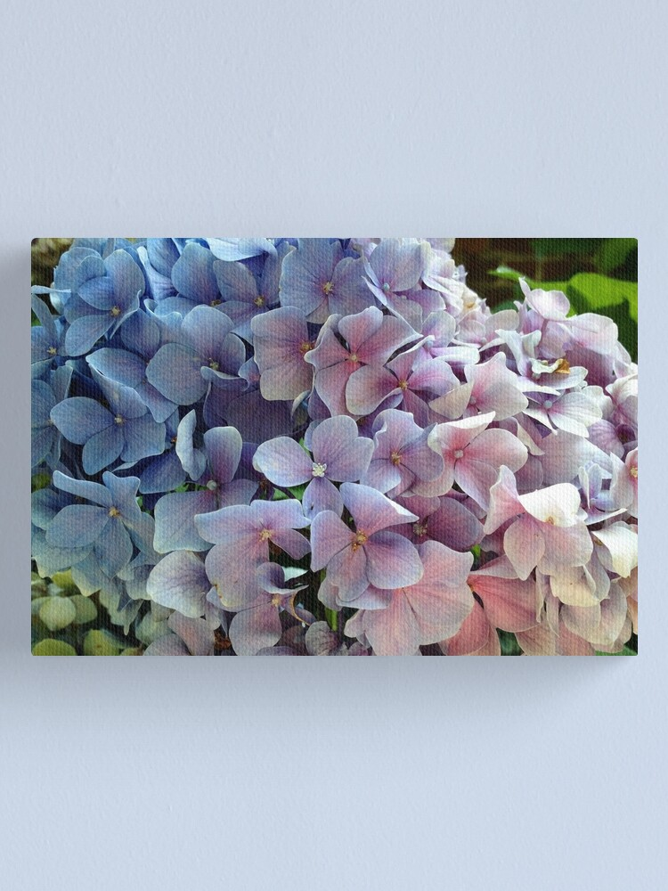 Alternate view of Hydrangea  Canvas Print