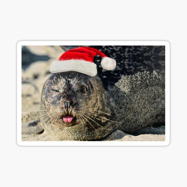 Holiday Harbor Seal Sticker
