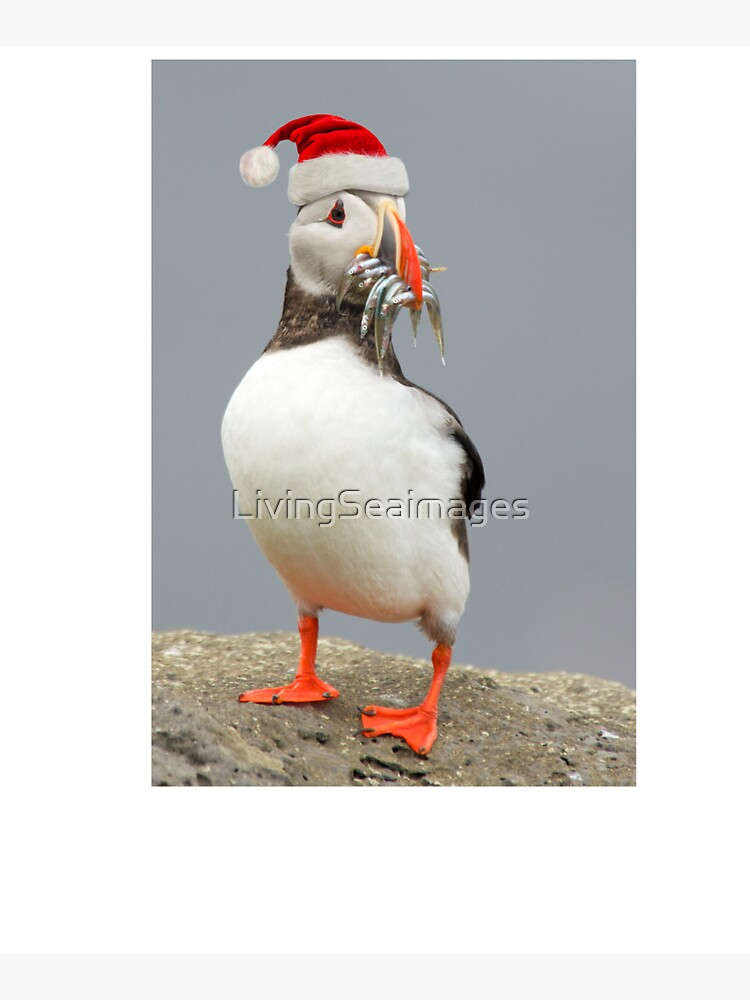 Holiday Puffin by LivingSeaimages