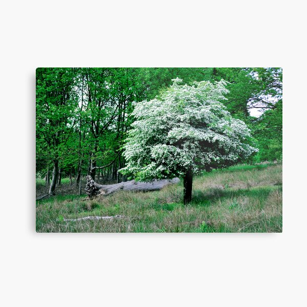 In to the Wilderness Metal Print
