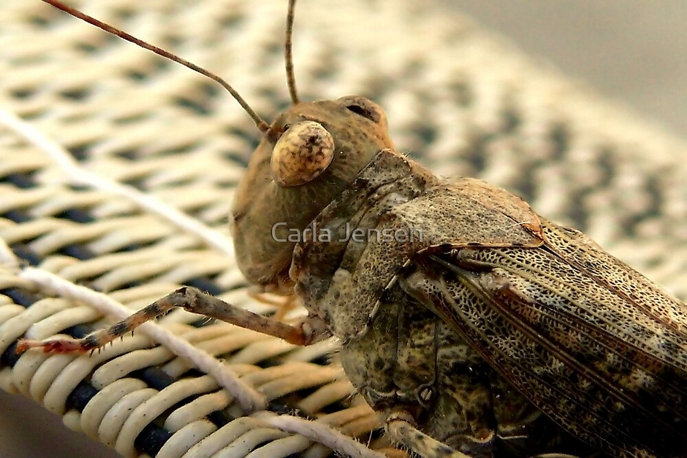 The Wise Ole Grasshopper ~ Seaside  Hopper by Carla Jensen