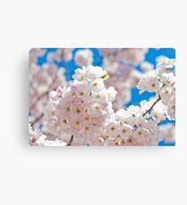Cherry Blossoms 02 Canvas Print