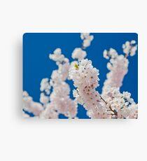 Cherry Blossoms 03 Canvas Print
