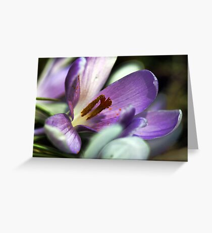 Lavender Crocus - Battered By The Storm Greeting Card