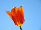 Tulip Flower Floral art Spring Blue Sky Baslee Troutman by BasleeArtPrints