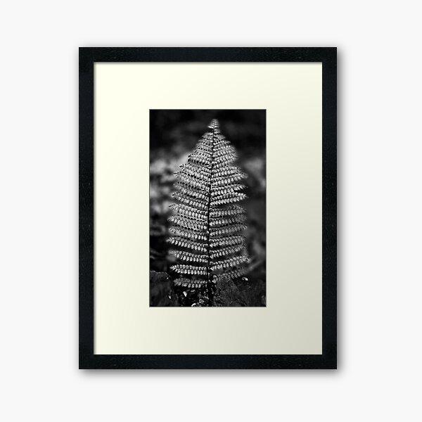 Silver Fern Framed Art Print