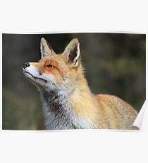 Fox - 2138 Poster