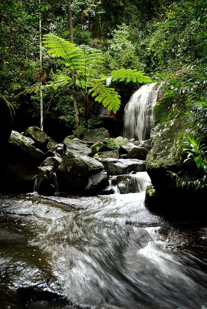 Serenity Falls, Buderim by Carol Knudsen