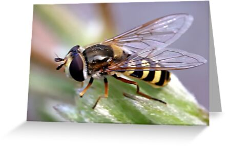 Hover Fly by Ray Clarke