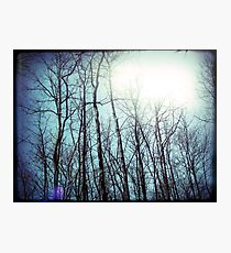 a whispered love story floating in the tops of the trees fingertips Photographic Print