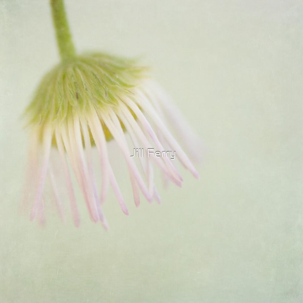 Flypaper Daisy by Jill Ferry