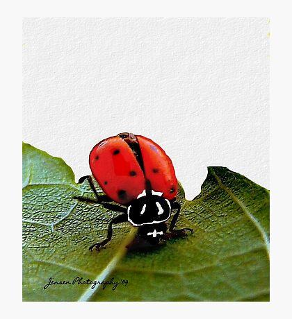 Ladybug Headstand    ( Ladybug Series )  Photographic Print