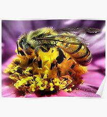 Bee~utiful Poster