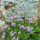 Wildflowers and Stone. Glacier National Park by Bryan D. Spellman