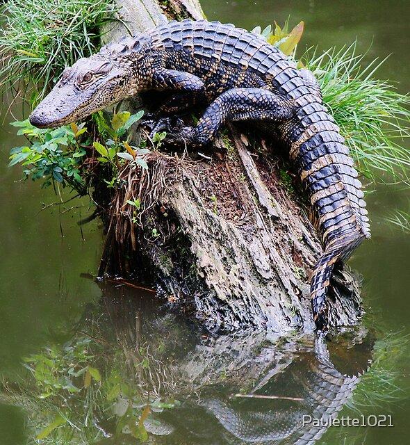 Baby Alligator in the Marsh by Paulette1021