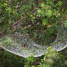 Spider Hammock by medley