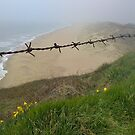South beach, Ballygarrett by Roisin Cooke
