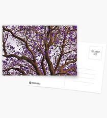 Jacaranda  Postcards