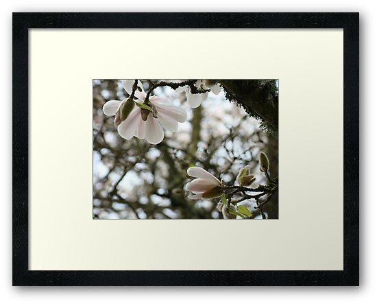 Flowering Tree Pink Magnolia Flowers art Baslee Troutman by BasleeArtPrints