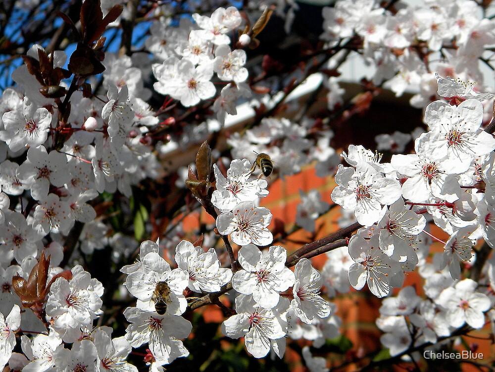 Cherry Blossom by ChelseaBlue