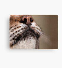 Lynx (profile) Canvas Print