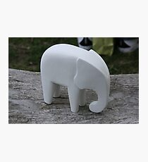 A white Elephant! Photographic Print