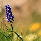 Spring blues by bared