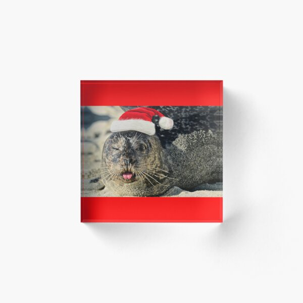 Holiday Harbor Seal Acrylic Block