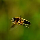 Honey-Bee in flight by Russell Couch