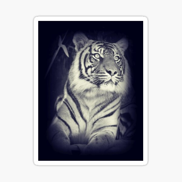 Black & White Sumatran Tiger Sticker