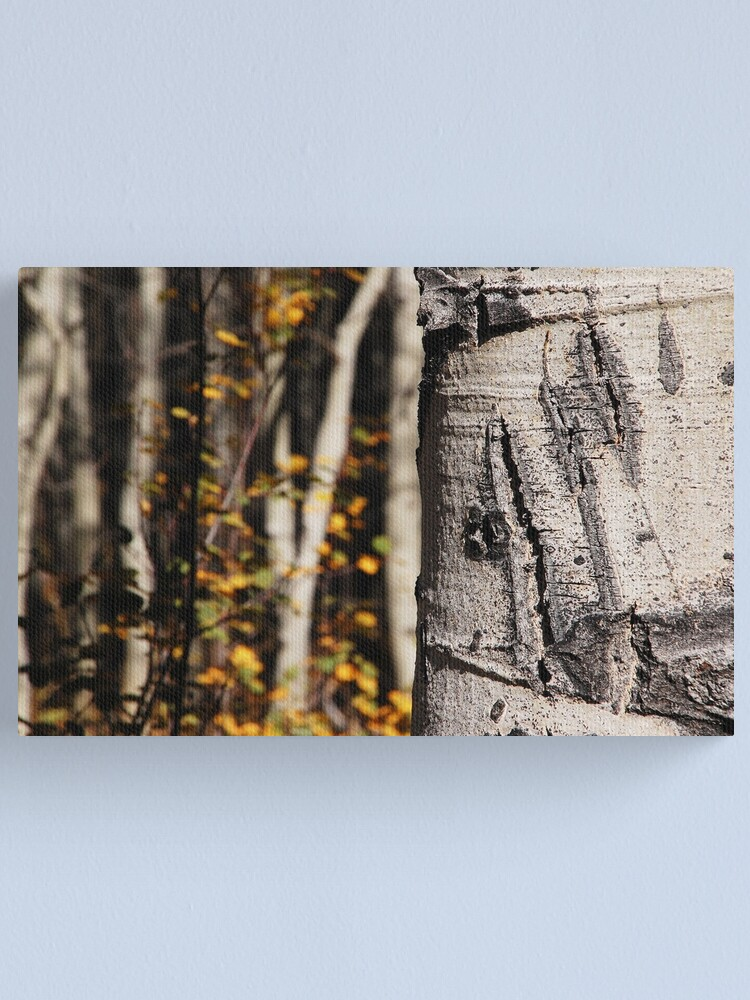 Alternate view of Bear Claw Scratch on Quaking Aspen Canvas Print