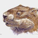 Portrait of a Woodchuck by April Neander