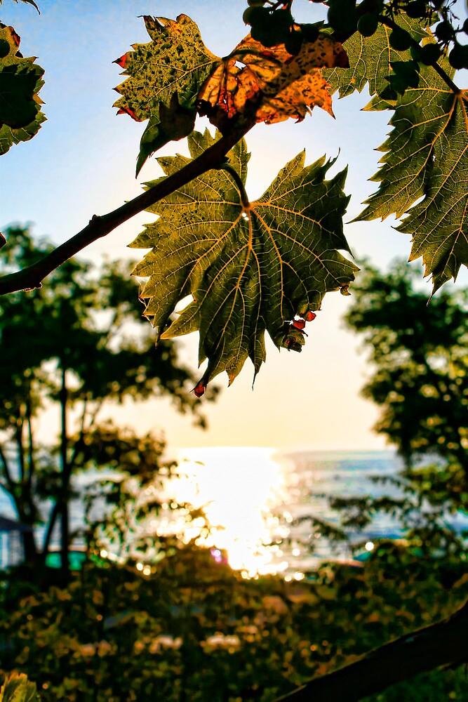 Wine Leaf - Summer in Croatia by Calin Lapugean