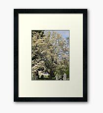 Dogwood Framed Print