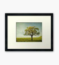 Appletree Framed Print