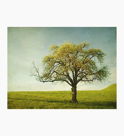 Appletree Photographic Print