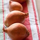 Onion Line Up by Hege Nolan